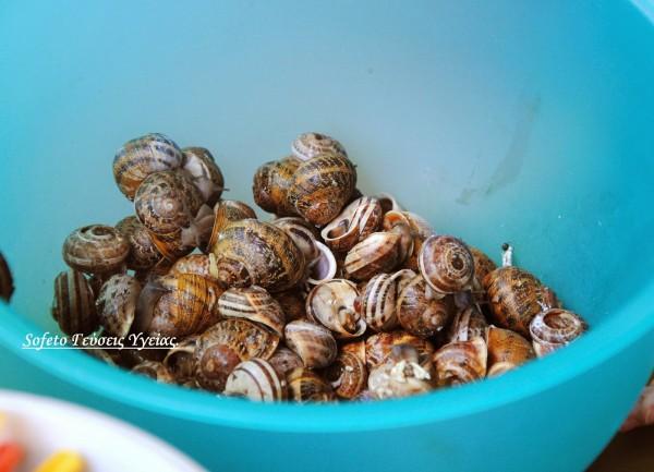 σαλιγκάρια με ζέα 2
